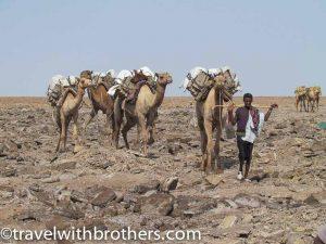 Camel caravan, Dallol