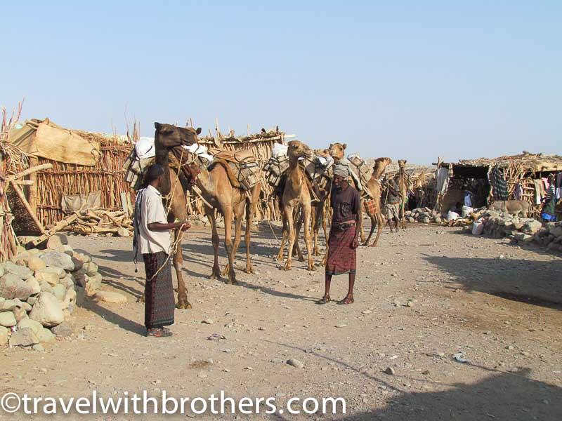 Camel caravans at Hamad Ela, Ethiopia