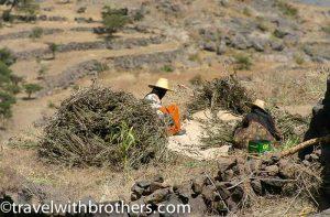 farmers at haraz mountains