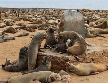 Namibia, seals colony at Cape Cross