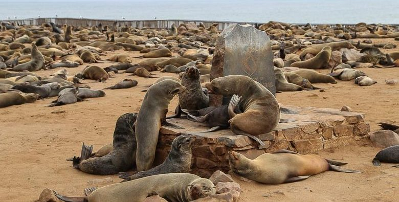 Namibia, seals colony at Cape Cross