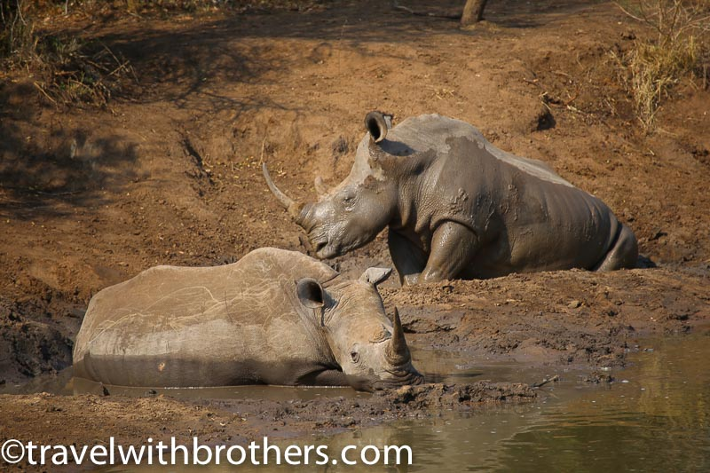 Mkhaya game reserve, Swaziland