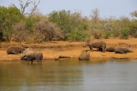 Swaziland, Mkhaya game reserve