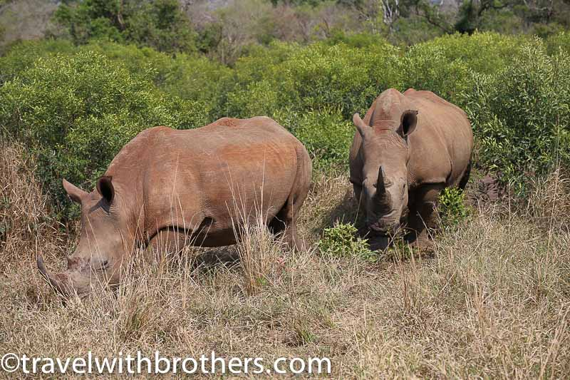 Hluhluwe - Imfolozi Game reserve, two big rhinos
