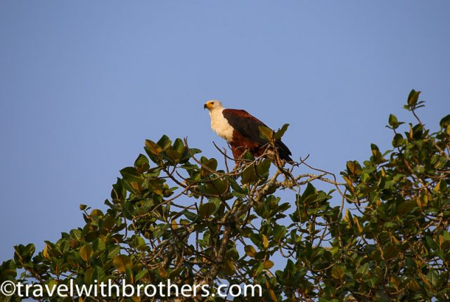 St. Lucia estuary, Fish Eagles