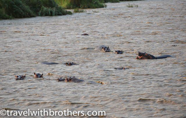 St. Lucia estuary, hippos