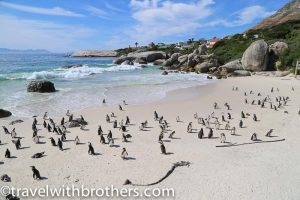Cape Peninsula, Simon's Town - Boulders beach