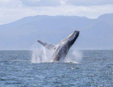 Whales watching, Sudafrica