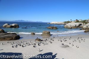 Cape peninsula, Boulders Beach