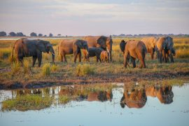 Botswana, Chobe National park