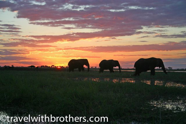 Sunset along the river with elephants at Chobe National Park, Botswana