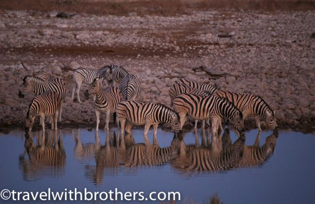 Etosha National Park, Okaukejo rest camp waterhole