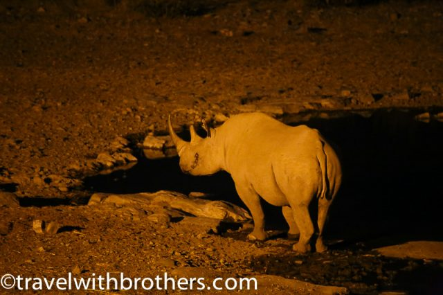 Etosha National Park, night game viewing at Halali waterhole