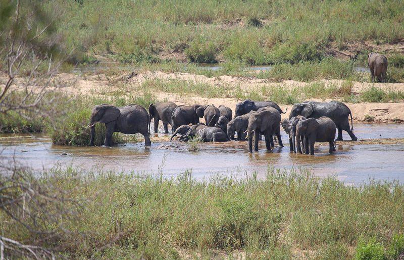 Sudafrica, guida alla visita del Parco Nazionale Kruger