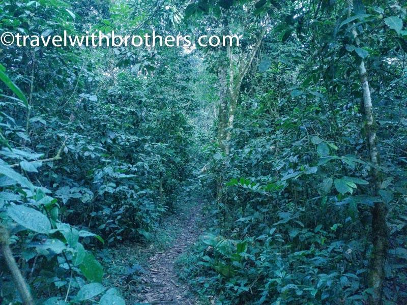 kalinzu forest