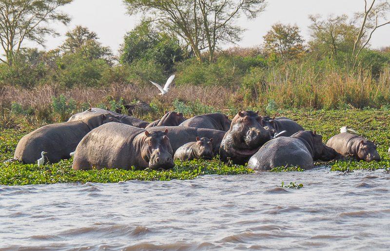 Malawi, alla scoperta del Parco Nazionale Liwonde