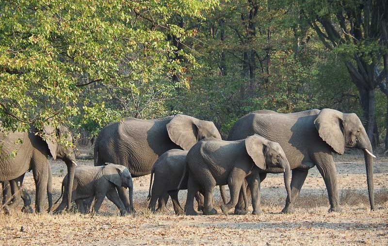 Liwonde National Park, a herd of elephants