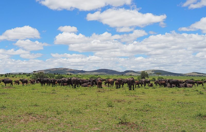 Kenya, Masai Mara: the most famous park of Africa