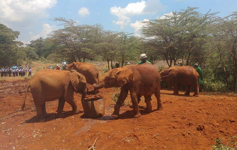 Nairobi Elephants Orphanage