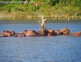Lake Naivasha boat ride
