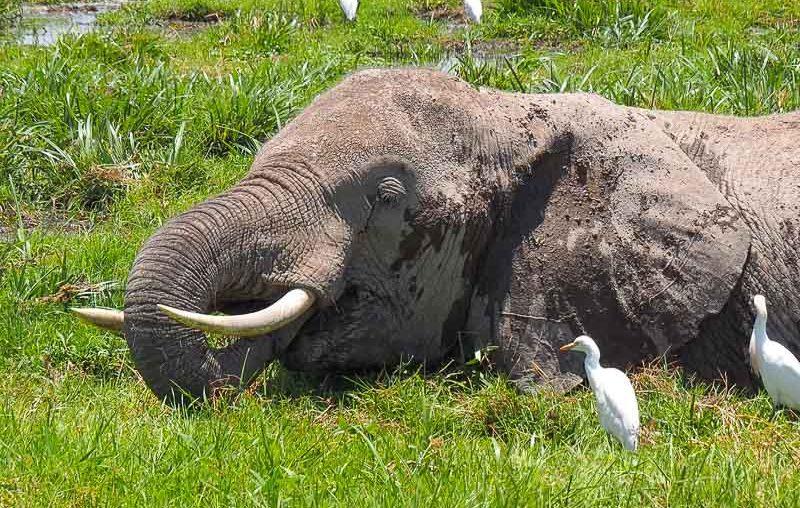 Amboseli 6
