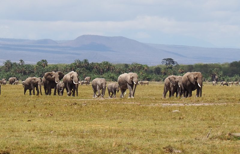 Kenya, Parco Nazionale di Amboseli: la terra dei giganti