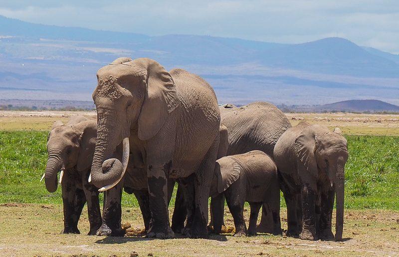Kenya, how to plan a safari
