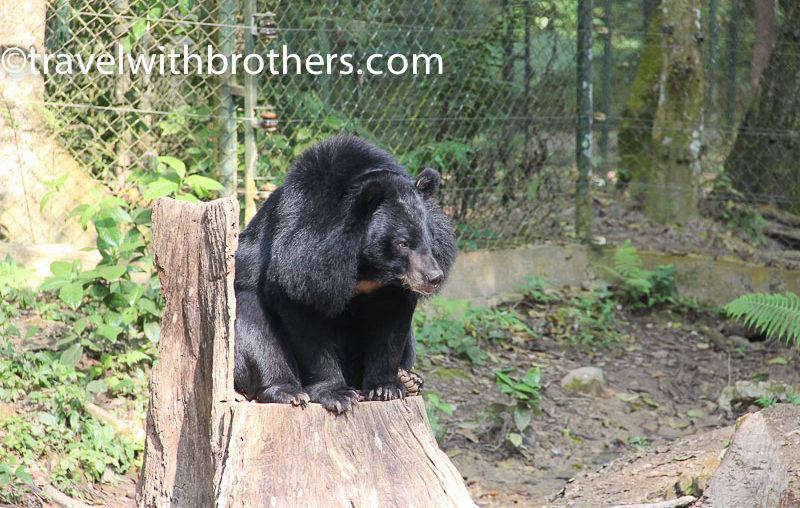 Luang Prabang, Kuang Si Asian Bear Sanctuary