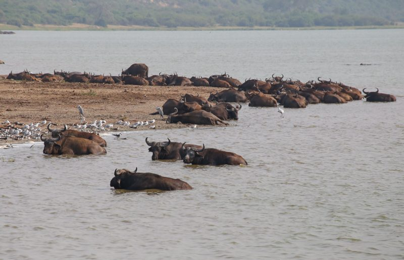 Uganda, cruising the scenic Kazinga Channel