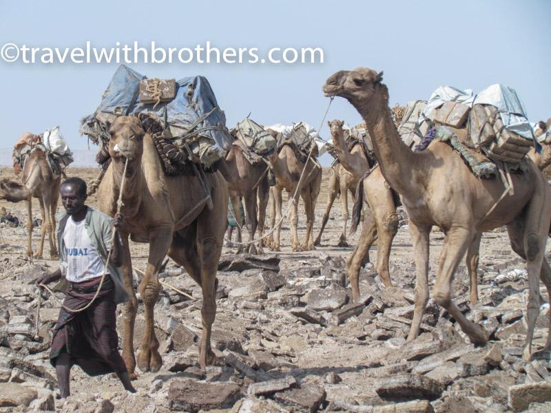 Dancalia, una carovana di cammelli pronta a partire